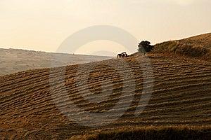Fields Grain In Susnet Stock Photo - Image: 15200830