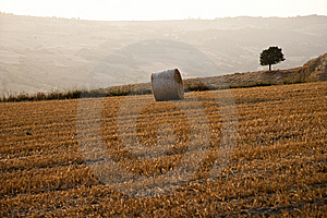 Tree And A Fields Grain With Bale Royalty Free Stock Photography - Image: 15201307