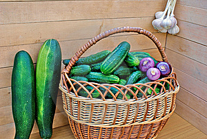 Garden Green Cucumber In Wicker Lug Stock Images - Image: 15213954