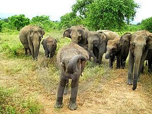 Speaking Elephant Stock Photography - Image: 15213962