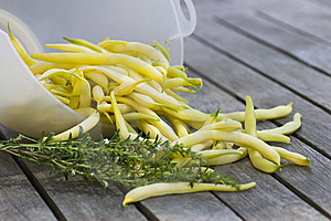 Yellow Beans With Savory Royalty Free Stock Photos - Image: 15215878