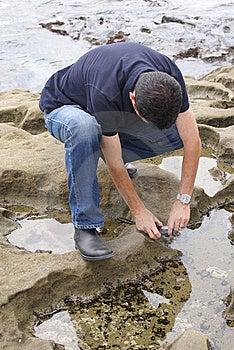 Man Photographing Sea Anemone Stock Photo - Image: 15216960