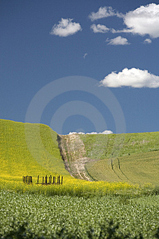 Bright Sunny Day In The Palouse. Royalty Free Stock Image - Image: 15217676
