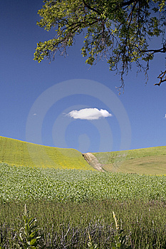 Dirt Road In A Field. Stock Photo - Image: 15217680