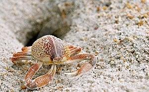 Crab Stock Image - Image: 15218111