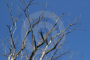 Dry Tree Stock Images - Image: 15218464