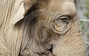 Elephant Portrait Stock Images - Image: 15219534