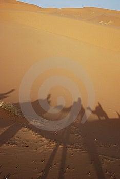 Camel Trails Stock Images - Image: 15220874