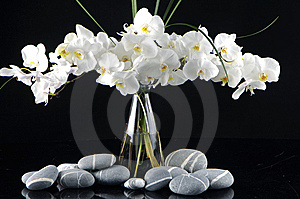 Orchid In Vase Royalty Free Stock Photography - Image: 15221487