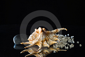Shell And Bath Salt Stock Photography - Image: 15221612