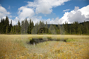 Beautiful Bog In Romania Royalty Free Stock Images - Image: 15221969