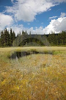 Beautiful Bog In Romania Stock Photos - Image: 15221973