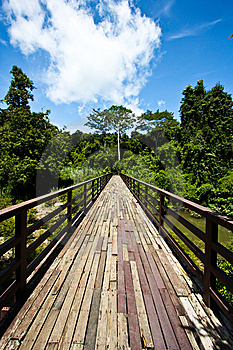 Wood Bridge To Jungle With Sky Stock Photography - Image: 15226522