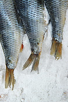 Salted Fish Royalty Free Stock Photo - Image: 15228735