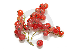 Clusters Of Red Currant Isolated On White Royalty Free Stock Photos - Image: 15230208