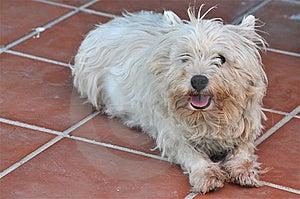 Pretty Pet Stock Images - Image: 15231494