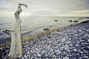 Rocky Beach Royalty Free Stock Image - Image: 15231546
