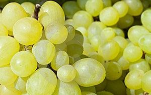 Ripe, Juicy White Grapes Stock Image - Image: 15235161