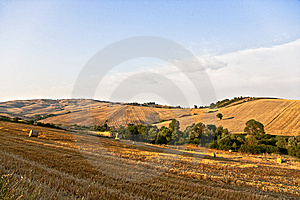 Tree And A Fields Grain With Bale Stock Photos - Image: 15237033