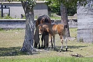 Wild Horses Stock Photography - Image: 15237312