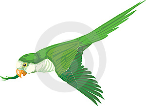 Parrot Green Stock Image - Image: 15239661