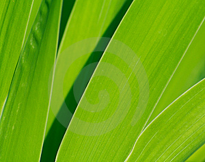 Green Leaves Texture Royalty Free Stock Photo - Image: 15244255