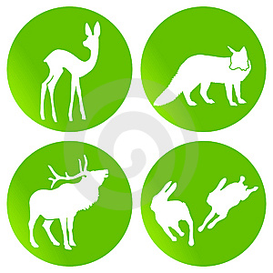Green Wildlife Stock Image - Image: 15250601