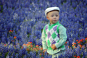Boy In Bluebonnets Royalty Free Stock Photography - Image: 15254607