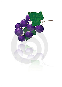 Black Currant Stock Images - Image: 15255074