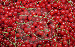 Currants Royalty Free Stock Photo - Image: 15256225