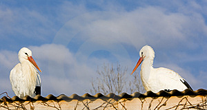 Storks Breeding Royalty Free Stock Images - Image: 15258189