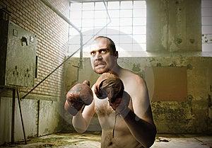 Boxer Royalty Free Stock Image - Image: 15262016