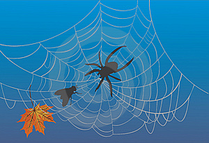 Spider Web And Fly On Blue Royalty Free Stock Images - Image: 15262259
