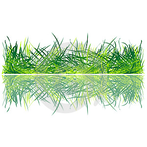 Fresh Grass Royalty Free Stock Images - Image: 15266359