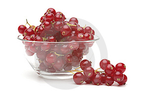 Red Currant Royalty Free Stock Photography - Image: 15267297