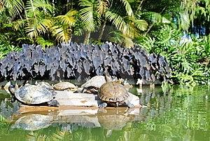 Janeiro Ρίο χλωρίδας 3 De Fauna Στοκ Εικόνες - εικόνα: 15270530