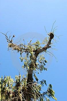 Rio De Janeiro - Fauna And Flora (1) Royalty Free Stock Photography - Image: 15271227