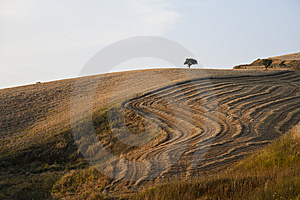 Fields Grain With Bales Stock Photography - Image: 15271582