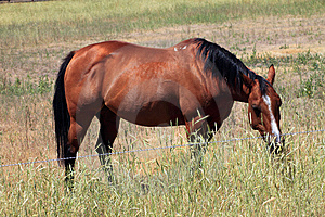 Horse In A Field, Washington State. Stock Image - Image: 15272251