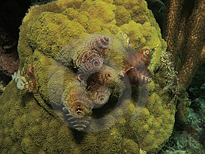 Christmas Tree Worms Stock Photos - Image: 15283873