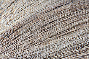 Close Up Broom Stock Photography - Image: 15286242