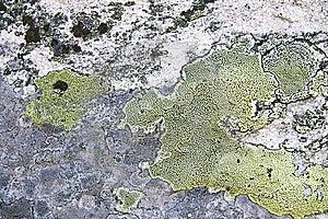 Texture Of Nature Stone Background Royalty Free Stock Image - Image: 15289286