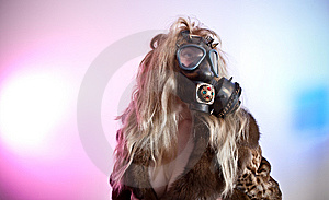 Gas Mask Stock Images - Image: 15293214