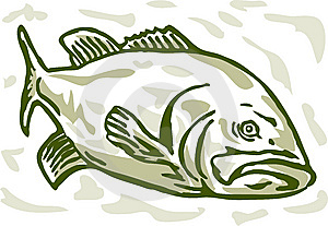 Largemouth Bass Drawing Stock Photography - Image: 15299932