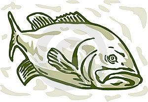 Largemouth Bass Drawing Stock Photography - Image: 15299932