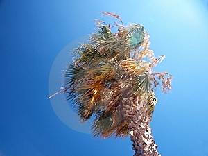 Exotic Palm Tree On A Windy Day Stock Photos - Image: 15303763