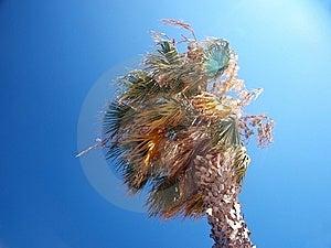 Palmera Exótica En Un Día Ventoso Fotos de archivo - Imagen: 15303763