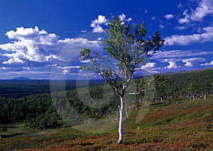 Lonely Tree Stock Photos - Image: 15305773