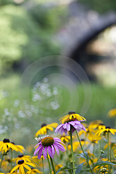 Central Park At The Pond Royalty Free Stock Photography - Image: 15307637