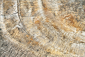 Old Wood Cut Royalty Free Stock Images - Image: 15310689